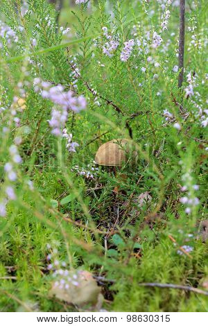 Edible mushroom in the grass.