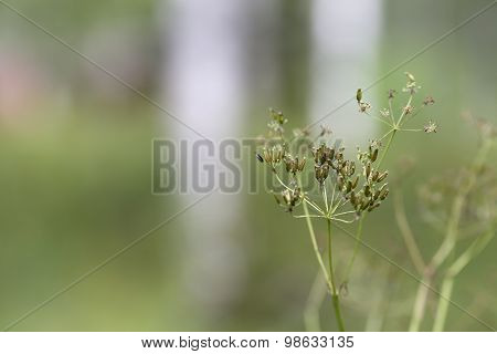 Generic vegetation in the nature