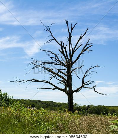 Dead Tree in Prairie Landscape