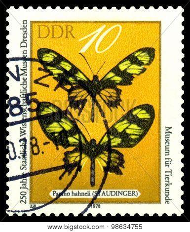 Vintage Postage Stamp. Papilio Hahneli.