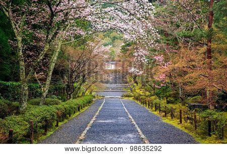 Path To Japan Shrine