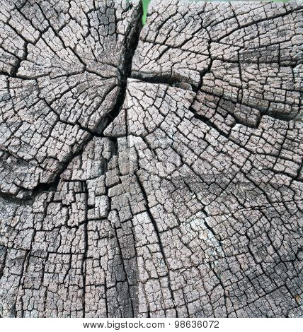 Tree Lumber Closeup Gnarl.