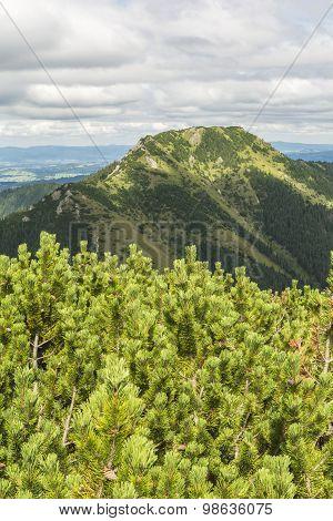 Summit Bobrowiec (bobrovec)