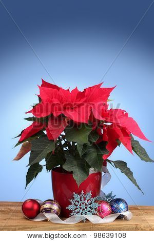 Beautiful poinsettia with christmas balls on wooden table on blue background