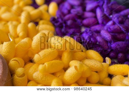 Silk Worm Cocoons