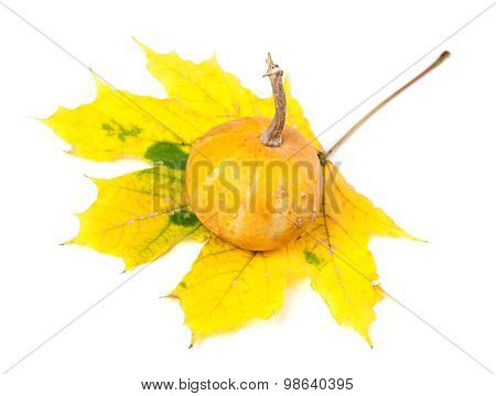 Small Decorative Pumpkin On Yellowed Autumn Maple-leaf