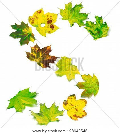 Letter S Composed Of Multicolor Maple Leafs