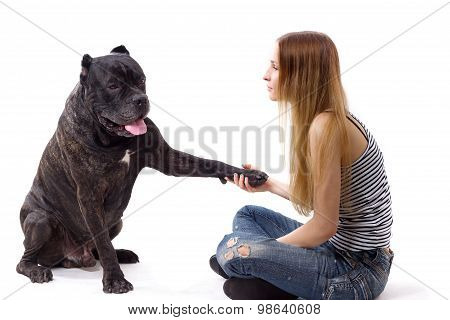 She Teaches Her Dog Cane Corso Team Give Paw