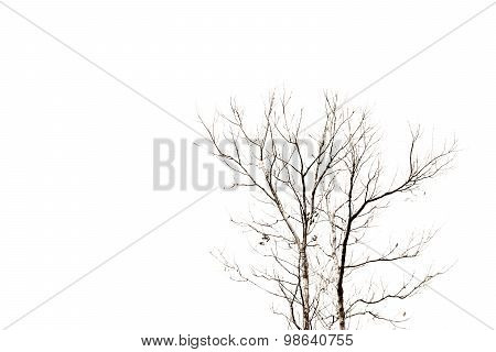 Abstract Death Tree