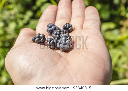 Fruits Blackberries