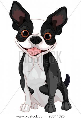 Illustration of cute Boston terrier