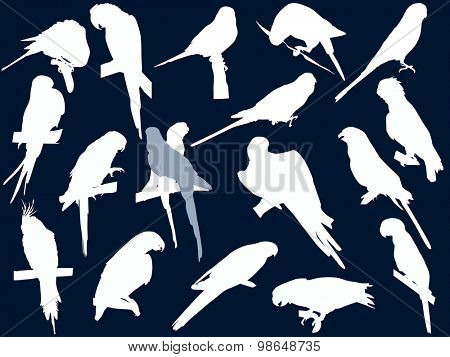 parrot silhouettes collection isolated on blue background