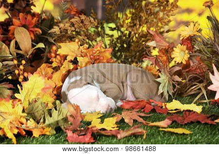 An adorable pitbull puppy napping on a lawn among colorful fall foliage.