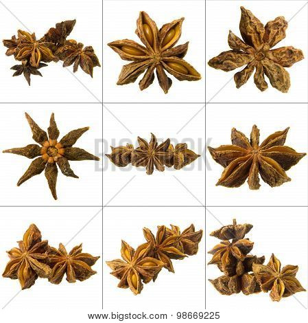 Chinese Anise