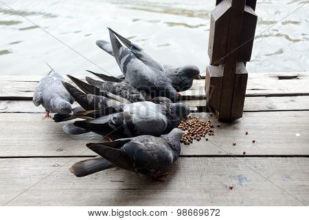 Group Of Pigeon Eating.