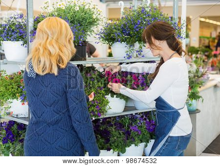 Mid adult florist assisting female customer in buying flower plants at store