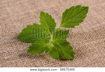 Fresh Healthy Lemon Balm On Jute Canvas, Herbalism