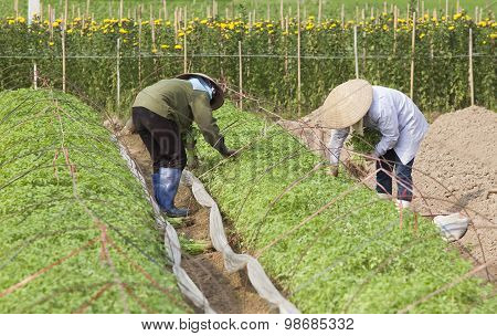 Asian farmers with conical hat working on a new plant farm