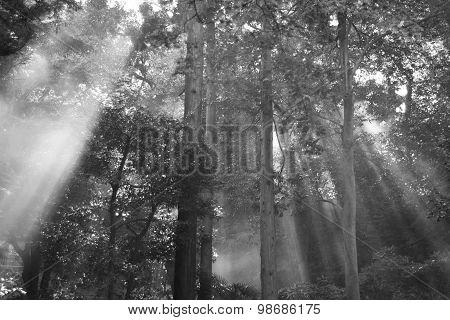 Filtered Light