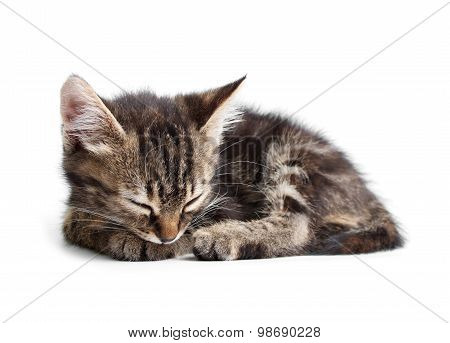 Little kitten sleeping isolated on white background