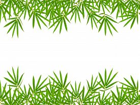 foto of bamboo  - bamboo leaves isolated on white background clipping path included - JPG