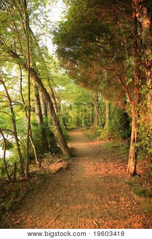 tree line pathway during golden hour