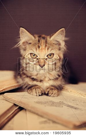 A cute adorable kitten wearing glasses reading a book!