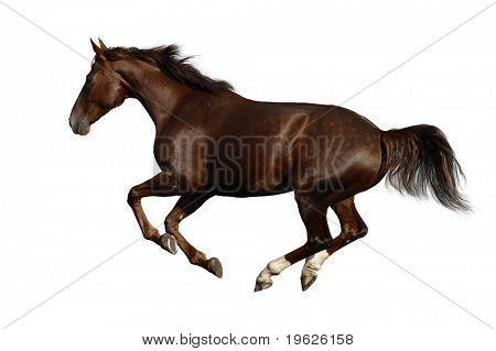 galope de caballo