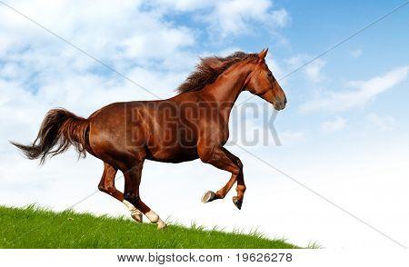 caballo galopa
