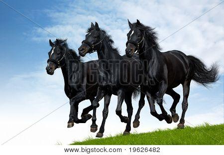 Tres galopes de caballos negros