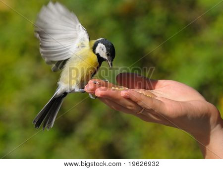 a bird in the hand is worth two in the bush, one today is worth two tomorrows