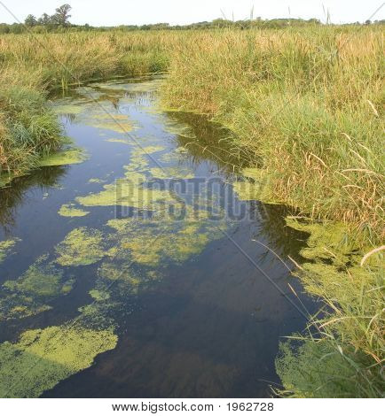 Wetland Drainage