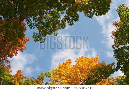 Autumn maple leaves on blue sky with clouds