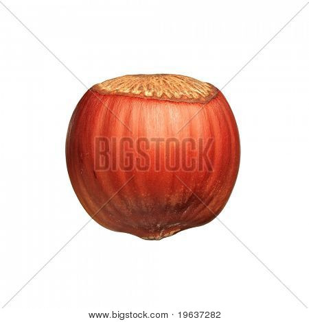 Closeup of hazelnut isolated on white background