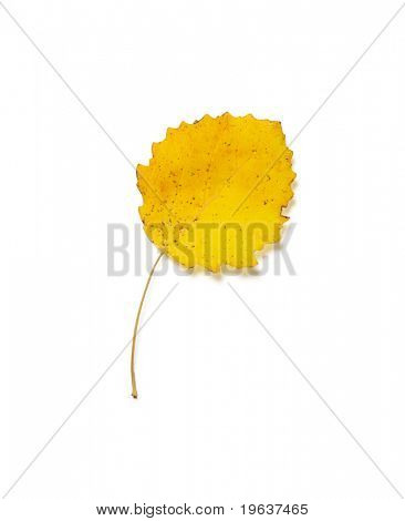 Closeup of yellow autumn leaf isolated on white background with light shadow