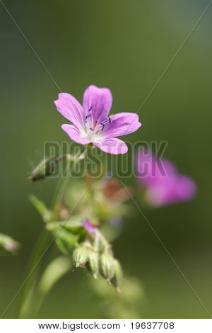 Closeup of pink flower in forest. Shallow focus depth on flower