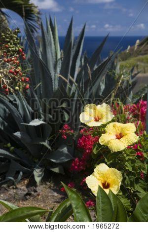 Flower Garden Overlooking The Sea