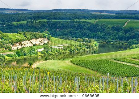 Wine-growing On The Hills In Summer