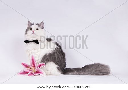 cat with flower in the studio