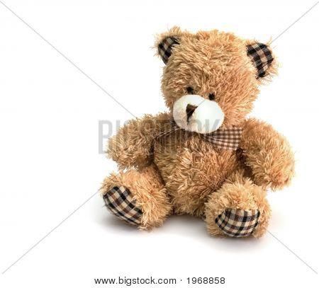 Flauschige Bär
