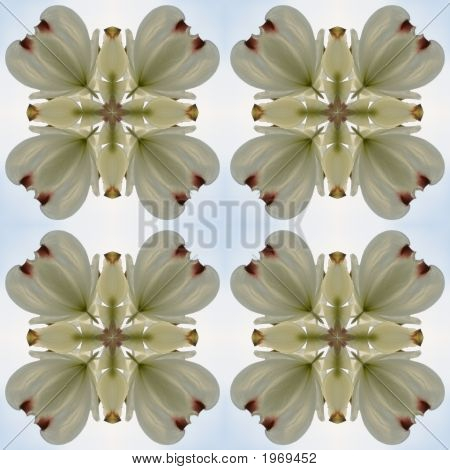 Kaleidoscope Pattern Of Dogwood Blossoms