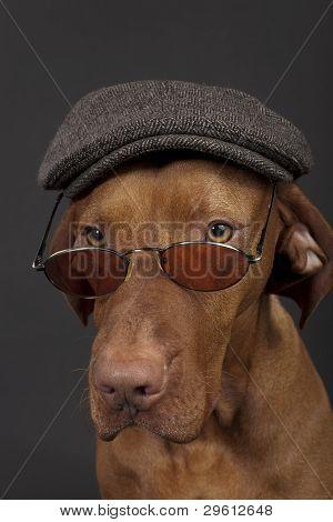 Newsboy Dog