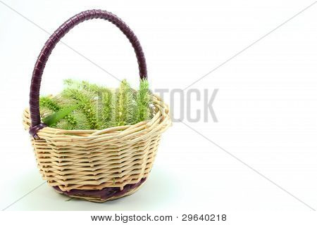 basket with green foxtail