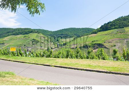 Country Road In Moselle Valley In Summer Day, Germany