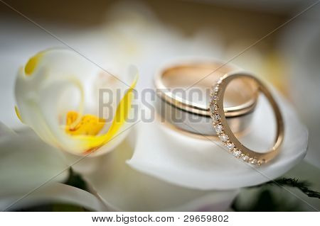 Wedding Rings Sitting On A White And Yellow Flower