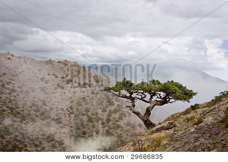 Lone Juniper On The Hillside