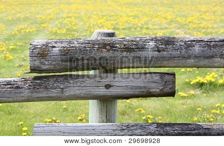 Flowered Fence
