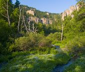 picture of spearfishing  - Flowers in cyan on the floor of Spearfish Canyon in the Black Hills of South Dakota - JPG