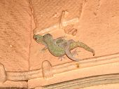 stock photo of hemidactylus  - Two House Geckos  - JPG