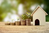 Real Estate Investment, Money Savings For Buy New Home, Financial Wealth Management Concept. A Plant poster